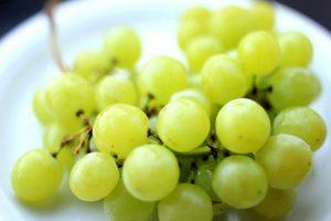 uva-bianca